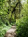 Trail - Munson Creek Falls SNS Oregon.jpg