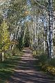 Trail through the Birch (1451283952).jpg