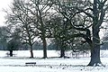 Trees in Prospect Park - geograph.org.uk - 1156893.jpg