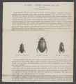Trogus - Print - Iconographia Zoologica - Special Collections University of Amsterdam - UBAINV0274 014 05 0003.tif