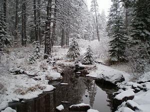 Truckee, California - First snow of winter, Trout Creek, December 2007