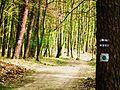 Trzebaw, forest.jpg