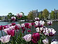 Tulips on the Amstel (5718719201).jpg
