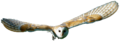 Tyto alba -British Wildlife Centre, Surrey, England -flying-8a (transparent).png