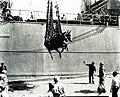 USSMexicanID1655 Mule 1944.jpg