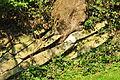 Ufenau 2011-07-25 18-01-50.jpg