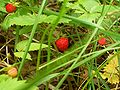 Ulibarri-wild-strawberries-4590.jpg