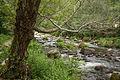 Umia River by Caldas de Reis, Galicia, Spain-5.jpg
