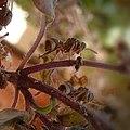 Unique ants hardworking.jpg