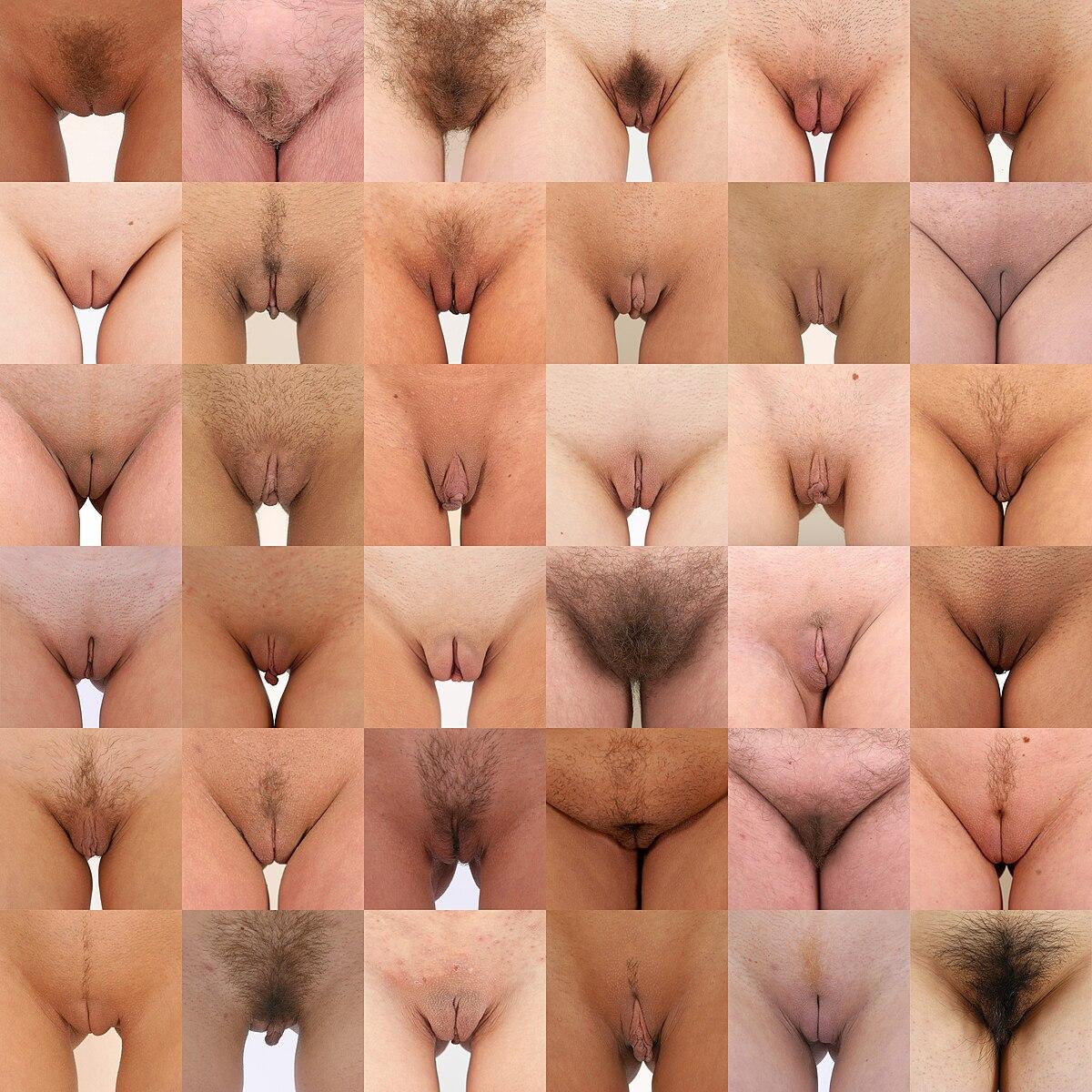 вагин фото женских видов