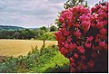 Vale Farm from Wotton Churchyard. - geograph.org.uk - 136660.jpg