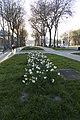 Versailles Avenue de Paris Sidewalk 2016-05-01 flower bed (01).jpg