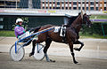 Vienna - Trotting racer at the Krieau - 6602.jpg