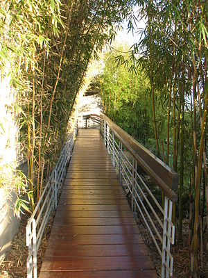 Tikotin Museum of Japanese Art - Bamboo-lined entrance bridge.