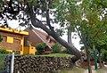 Villa Gesell Casa del Árbol 02.JPG