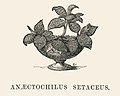 Vintage illustrations by Benjamin Fawcett for Shirley Hibberd digitally enhanced by rawpixel 19.jpg