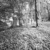 voormalige joodse begraafplaats met grafstenen te terborg - terborg - 20345250 - rce