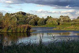 WWT London Wetland Centre - Image: Wetland Centre Lagoon