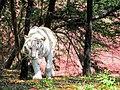 White Tiger Hyd.jpg