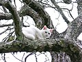 White cat in a tree.jpg