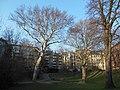 Wiener Naturdenkmal 457 und 620 - 2 Platanen und eine Sommerlinde (Döbling) a.JPG