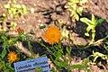 Wikipedia 13. Fotoworkshop Botanischer Garten Erlangen 2013 by-RaBoe 093.jpg
