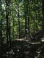 Wilhelmina - On the Trail - panoramio.jpg