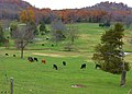 Williamson County, TN, USA - panoramio.jpg