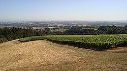 Wine Country of the Dundee Hills, Oregon.jpg