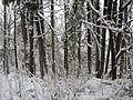 Winter storm, January 2017, southeast Portland, Oregon - 25.jpg