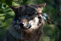 Wolf (3962999210).jpg