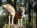 Wolf 610.JPG