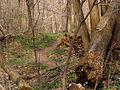 Woodland P4100089.JPG