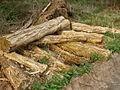 Woodland management - geograph.org.uk - 408613.jpg