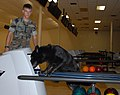 Working dog Dix checks out Guantanamo bowling alley.jpg