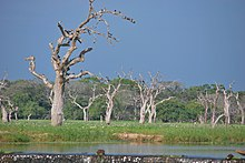 A water stream and dead trees in a wetland