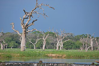 Yala National Park - Wetlands are one of habitat types of Yala