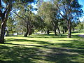 Yanchep National Park 4.jpg