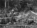 Yarding logs, unidentified location, Washington, 1920 (KINSEY 2797).jpeg
