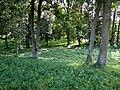 Zabłudów park dworski 2.JPG