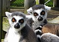 Zaboomafoo at magnetic hill zoo.jpg