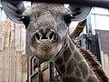 Zoo-Dortmund-IMG 5579.JPG