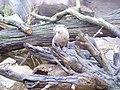 Zoo am Meer 2008 PD 78.JPG