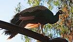 Zoo de Lisboa by Juntas 2.jpg