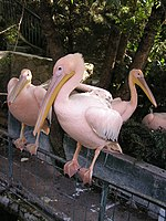 Zoo in Yalta 001.jpg