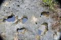 """Swiss cheese limestone"" (Pain Pond, San Salvador Island, Bahamas) 9 (16322263962).jpg"