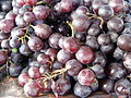 """a close up of Salem Grapes"".jpg"