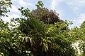 'Arecaceae' palm in Victorian garden Quex House Birchington Kent England.jpg