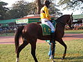 'BE SAFE' the favourite for Indian Derby-2015 in the paddock parade..JPG
