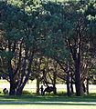 (1)Centennial Park 004a.jpg